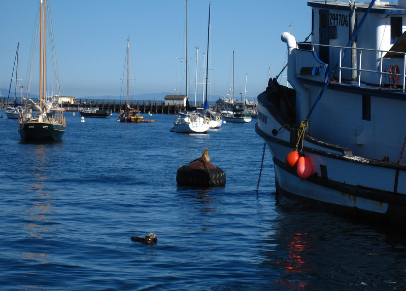 Seals and Sea Otters in the harbor!
