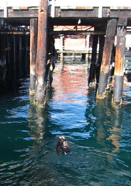 As do the cute California Sea Otters!