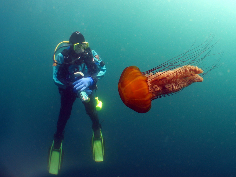Kelsey and I sit in 15 feet of open water to do our safety stop, when out of nowhere a large Sea Nettle came swimming towards her head...until I warned her!