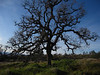 "The Manzanita trees were gnarly craggy ""Halloween trees"" as I called them   :) ...."