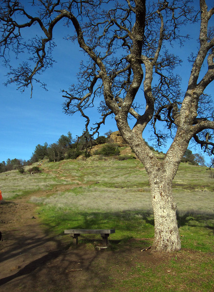 """A hike up """"Monkey Face"""" with Cathy and her lovely pup Garrison while visiting her and John in Chico, California."""
