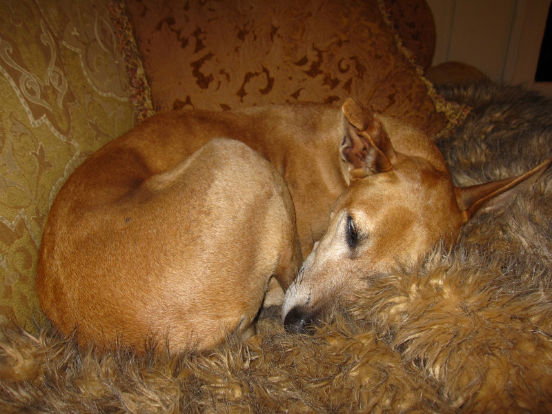 After a big day in the life of a dog, she sleeps..as do we :) The END