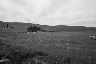 Sheep Farm. Patterson Pass Road. Livermore, CA, USA