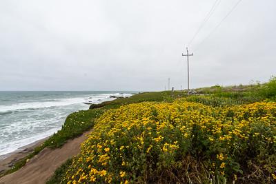 Wild Flowers. Near Pigeon Point Lighthouse. Pescadero, CA, USA