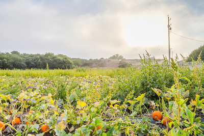 HDR Composition. Pumpkin Field. Wilder Ranch State Park - Santa Cruz, CA, USA