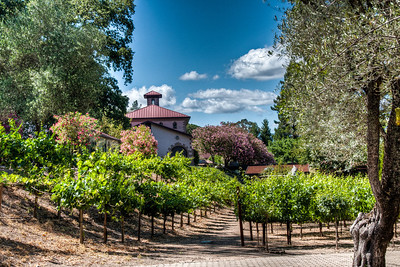 beringer-winery-estate-vineyard
