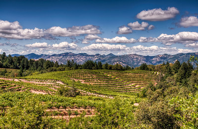 napa-valley-vineyard-hdr