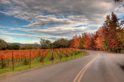 wine-grapes-vineyard-road-fall