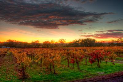 vineyard-sunset-fall-3