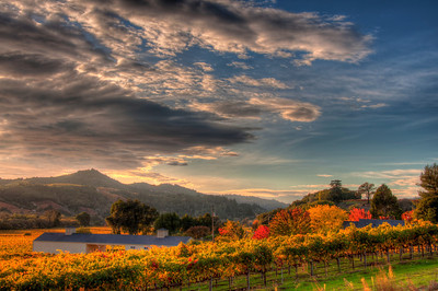 california-wine-grapes-vineyard-fall-5