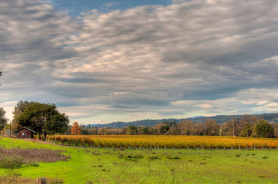 california-wine-grape-vineyard-fall-5