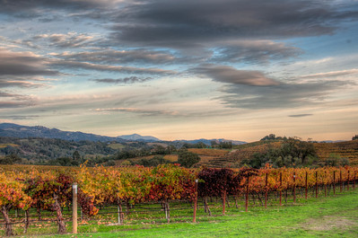 california-vineyard-fall
