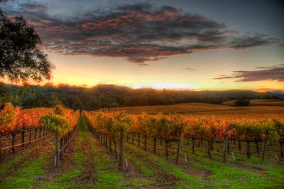 vineyard-sunset-fall-4