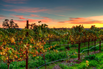 california-vineyard-fall-4
