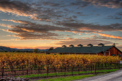 california-vineyard-fall-2
