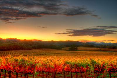 california-vineyard-sunset-fall-4