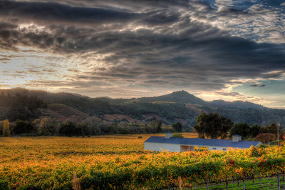 fall-wine-vineyard-clouds