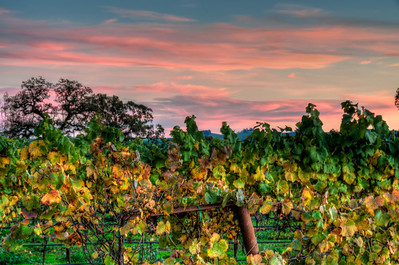 vineyard-sunset-fall-3-2