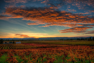 california-vineyard-sunset-fall-3