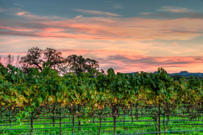 vineyard-sunset-fall-6