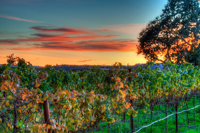 california-vineyard-fall-2-2