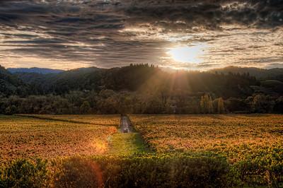 fall-wine-grapes-vineyard-sunbeam