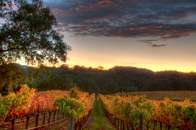 vineyard-sunset-fall-5