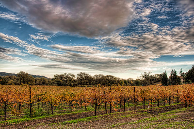 wine-grapes-vineyard-clouds-fall
