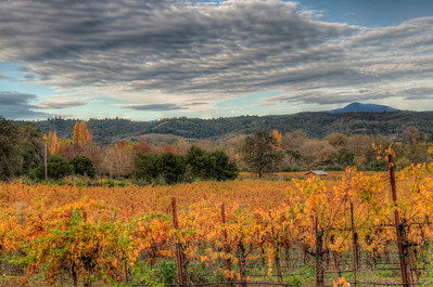 california-wine-grapes-vineyard-fall-4
