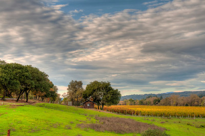 california-wine-grapes-vineyard-fall-3