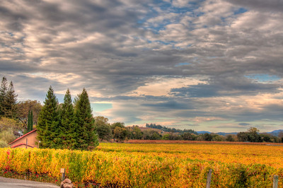 wine-grapes-vineyard-fall-4