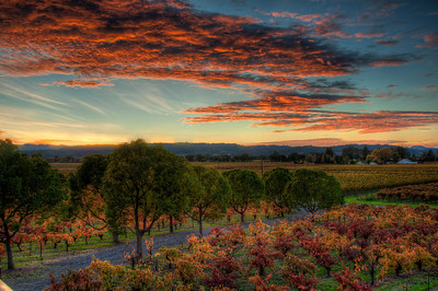 vineyard-sunset-fall