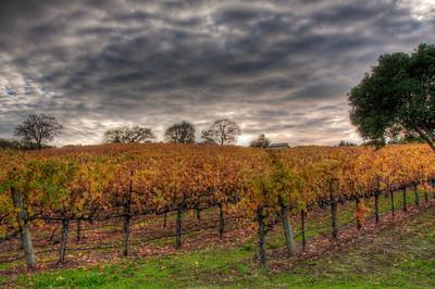 wine-grapes-vineyard-clouds-fall-2