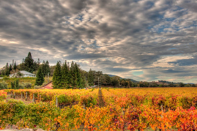 california-vineyard-clouds