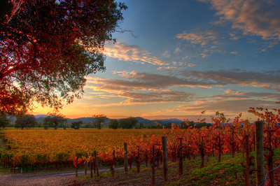 california-vineyard-sunset-fall-2
