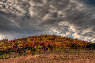 wine-grapes-vineyard-clouds-fall-2-2