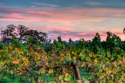 vineyard-sunset-fall-2-2