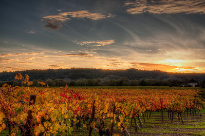 california-vineyard-sunset-fall