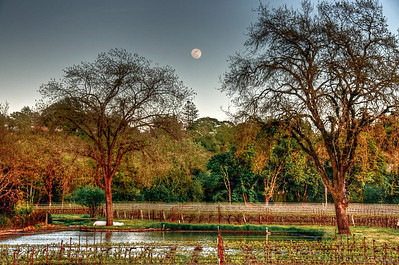 california-vineyard-grapes-moon-spring-4