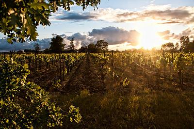 spring-wine-grape-vineyard-5