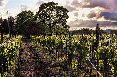 spring-wine-grape-vineyard-2