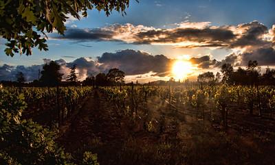 wine-grape-vineyard-sunset