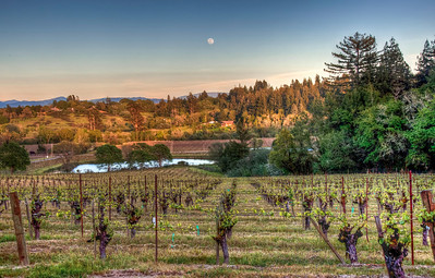 california-vineyard-grapes-moon-spring-2