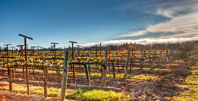 california-grape-vineyard-spring