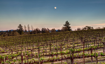 california-vineyard-grapes-moon-spring-6