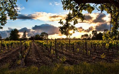 spring-wine-grape-vineyard-4