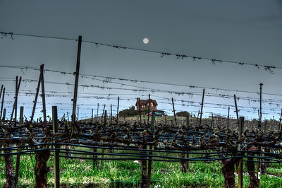 sonoma-vineyard-grapes-moon-spring