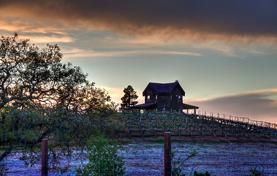 california-vineyard-grapes-house-spring