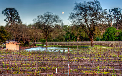 california-vineyard-grapes-moon-spring-3