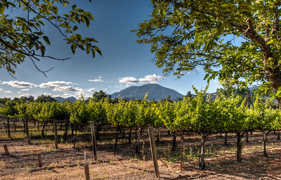 mt-st-helena-vineyard